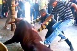 Cattle mistreated in Gaza