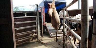 Kuruçay Slaughterhouse in Bolu